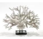 Коралл Branch I
