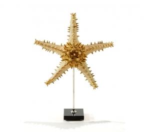 Предметы декора Deluxe. Звезда морская I