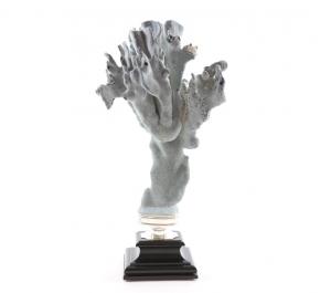 Предметы декора Deluxe. Коралл Madrepora (32 х 24 см)