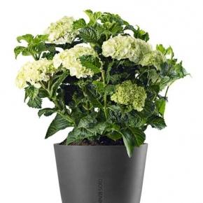 Горшки Кашпо Лейки для цветов. Горшок для растений с функцией самополива серый