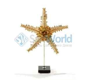 Звезда морская I