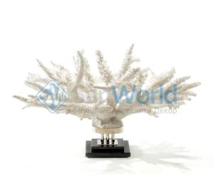 Коралл Branch II